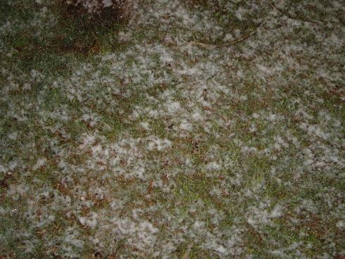 snow_galveston3.JPG